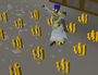 money-guides.png